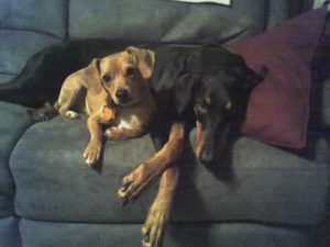 Chloe and Talleyrand from Sandy